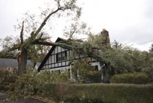 One of many homes hit by trees thanks to Sandy