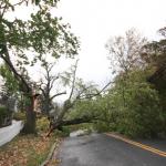 Tree down on Milton Road